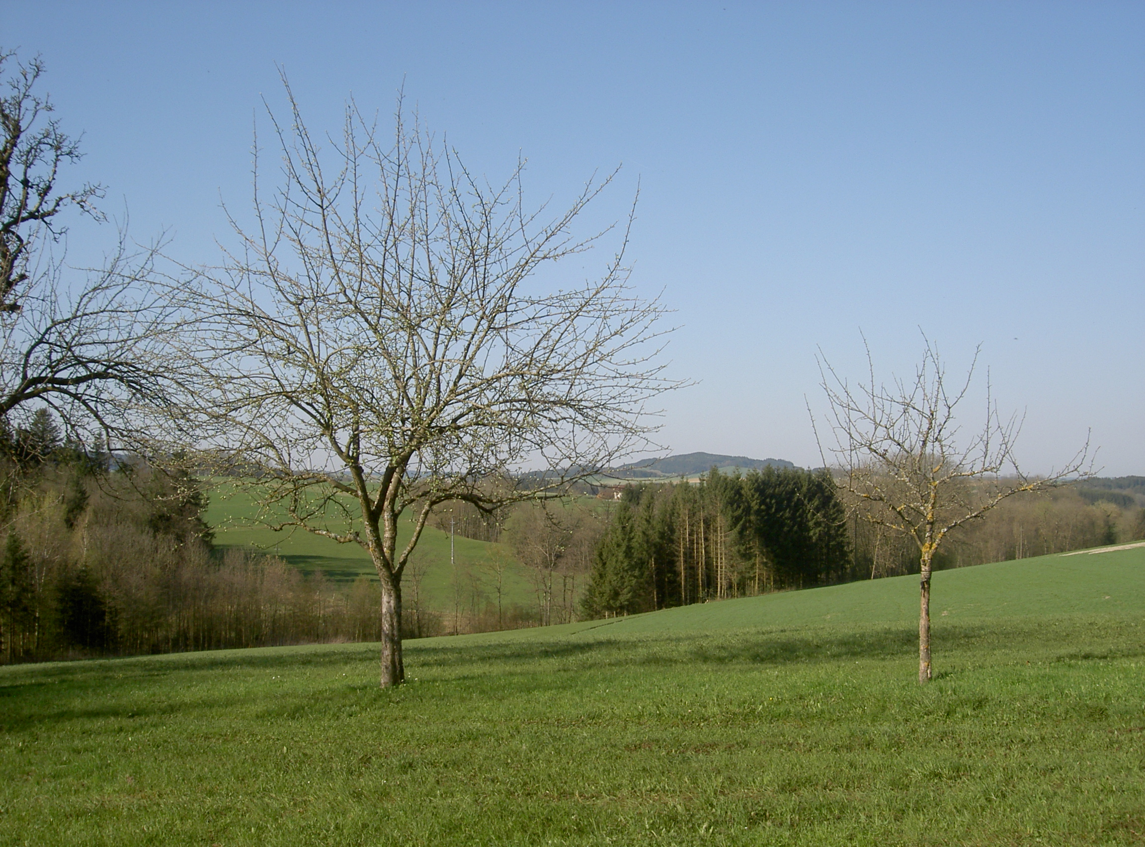 pict0022.jpg